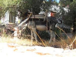 Donkey siesta - Sasalos
